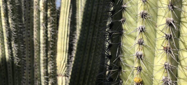 Marital problems and saying no depicted by cactus